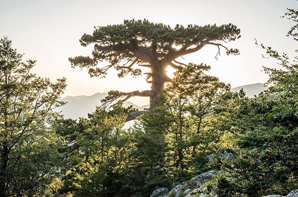 árboles monumentales de Italia
