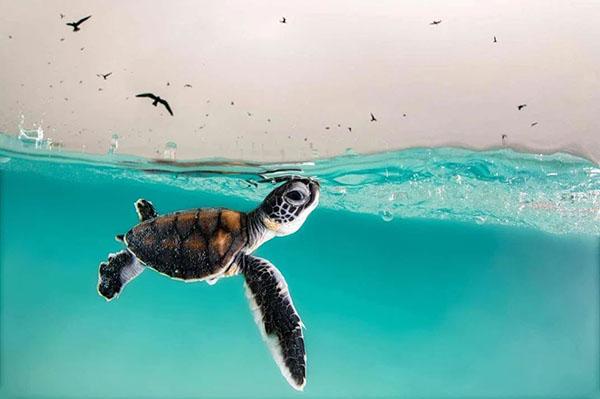 tortuga marina ganadora del Ocean Photography Awards