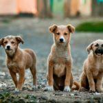 protección animal en España